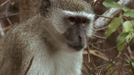 S01 E03 - Monkeys and Dragons - Africa from the Ground Up