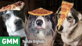 Dogs Balance Pizza On Their Heads - Teach Your Old Dog A New Trick