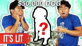 Dollar 1 Vs 50,000 Dollars Dog