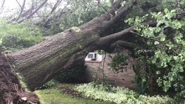Western New York Storm Damages Homes, Knocks Down Trees