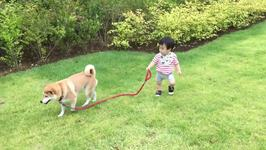 Friendly Dog Brings Baby for Walk