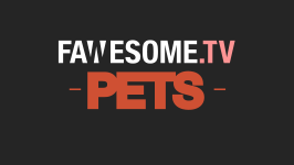 FawesomePets