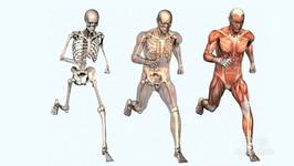 Which Is The Hardest Bone In The Body?