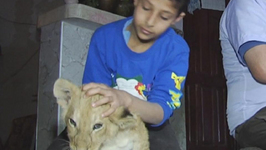 Gaza family buys lion cubs from war hit local zoo