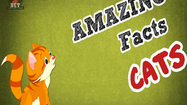 Interesting Facts about Cats - Facts about Animals