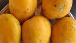 Side Effects Of Mango