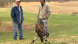 Falconry Rabbit Hunting- An Overview
