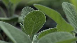 Topmost Herb Farm