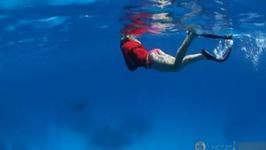 Great Barrier Reef Snorkelling Lady Elliot Island Queensland Australia