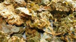 Almond Buttered Kale Chips