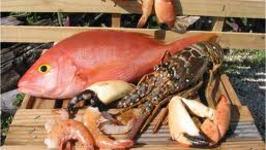 Top 5 Seafood Dishes To Enjoy On Christmas