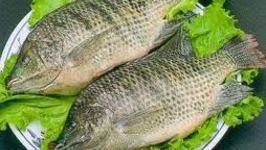 Top 5 Fish Recipes To Enjoy This Christmas