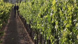 Seasons of the Vineyard: Summer (A Jordan Winery Series)