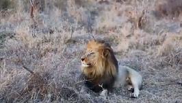 Safari Etiquette 101 - Swaziland
