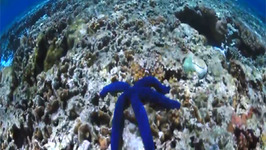The Great Barrier Reef's Lady Elliot Island
