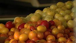 Urban Oaks Organic Farm