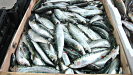How to Remove Fishiness from Sardines and Mackerel?