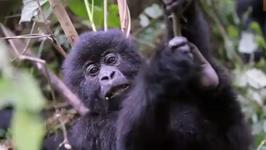 How To Book Your Gorilla Trek - Rwanda