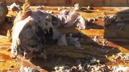 La Caja China Pig Roast