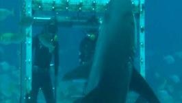 Shark Feeding Experience