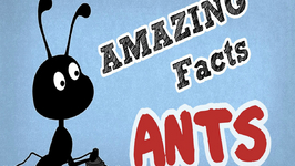 Amazing Facts About Ants  OMG Facts About Animals
