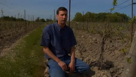 Know about Grafting in Vineyard