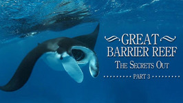 The Great Barrier Reef,The Secrets Out, Part 3