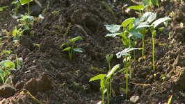 How to Keep Weeds out of your Garden