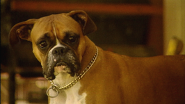 Good Dog Series 1, 2GD105- How to Tame A Boxer