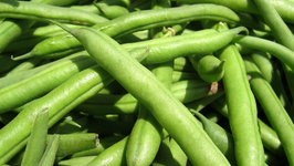Seasons- Beans