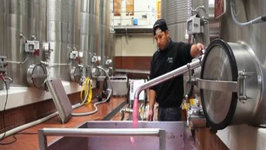 2013 Vintage at Jordan Winery: A Harvest Report (Russian River Valley Chardonnay)