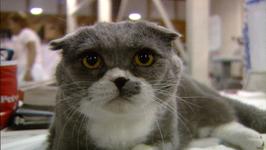 Pet Friends Series 1, PF121 - The Competitive Pet