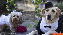 Super Cute Dogs Get Married