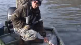All About Blue Catfish