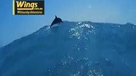 Wings Diving Adventures Experiences Reel