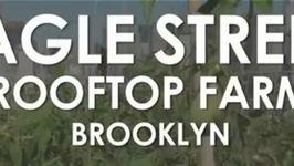 Hungry in Brooklyn: Eagle Street Rooftop Farm