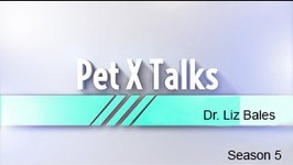 Pet X Talks - Dr. Liz Bales - Natural Feeding Behaviors For Indoor Cats Plus The Seeking Circuit