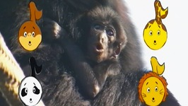 Baby Apes Animal Song  - Learn Animals Songs