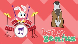 Baby Meerkats- Animal Sing Along Songs for Kids