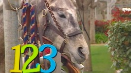 Counting Song Number 5 Horses  - Learn Numbers Kids Songs