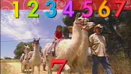 Counting Song Number 7 Llamas  - Learn Numbers Kids Songs