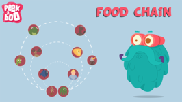 What Is A Food Chain? - The Dr. Binocs Show