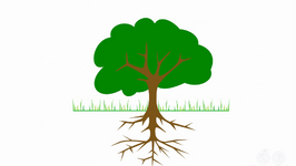 Why Do Plants Have Roots?