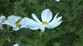 How To Classify Plants For Compartmentalised Garden