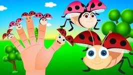 Ladybug Finger Family Nursery Rhyme  Bug Finger Family   Animal Finger Family