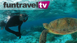 Swimming With Turtles On Lady Elliot Island, Great Barrier Reef