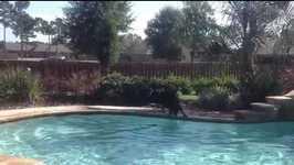 Black Lab Afraid To Jump In Water