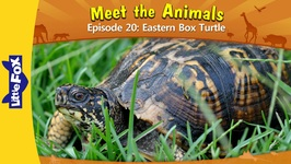Meet the Animals 20 - Eastern Box Turtle - Level 2