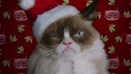 First look: Grumpy Cat's worst Christmas ever
