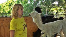 Pet World Insider Presents - Shangri Llama